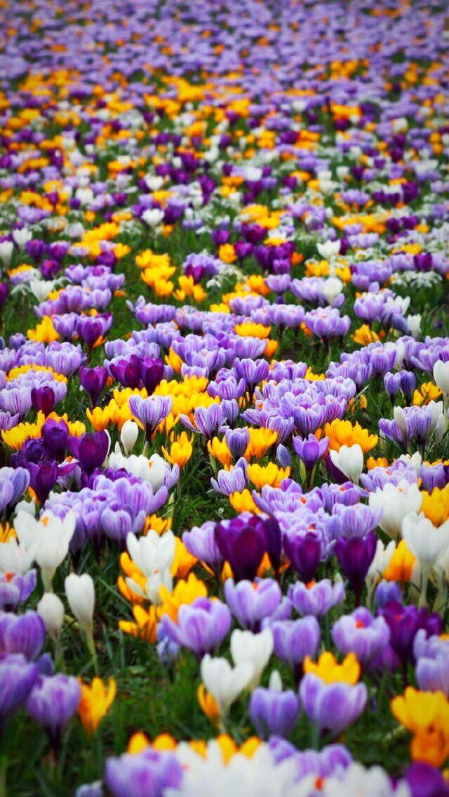 Wallpaper iPhone spring Flower background wallpaper
