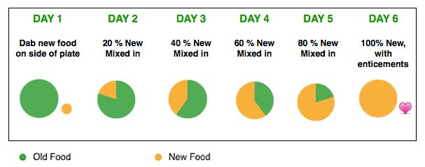 6-day plan for introducing new (healthy) cat food to a finicky cat - Natural Cat Care blog. http://www.naturalcatcareblog.com/2011/06/no-more-cat-hunger-strikes-life-saving-tips-for-introducing-new-foods/