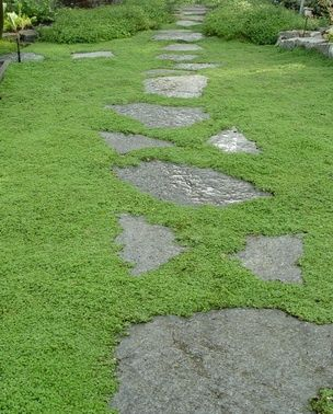 I love this idea: Corsican Mint ~ Wonderful, mat forming groundcover that features tight green, aromatic foliage. Tiny lavender flowers in summer. Plant as a lawn substitution or between stones so that the gentle scent of mint is released when walked on. Excellent for front entryways and back patios. Will take moist areas as well as normal landscape scenarios and will reseed easily in the garden.