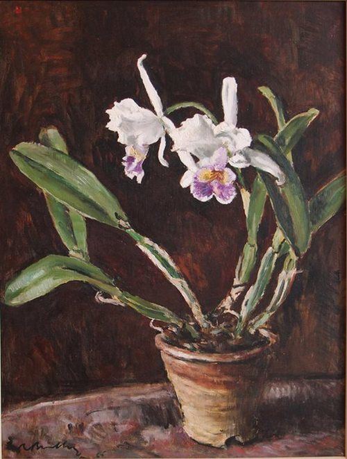 Robert Broadley | 'Still Life with Cattleya Orchid' | Oil on Canvas