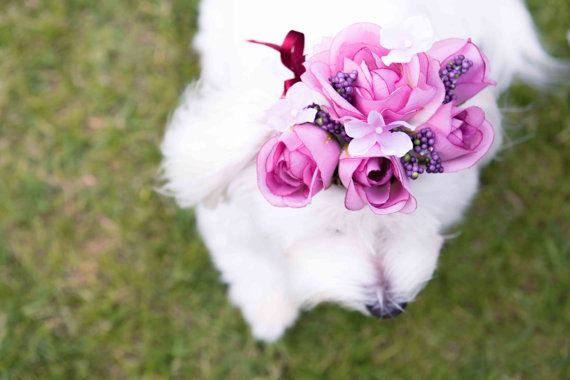 beautiful flower headpieces for your female dog's, visit http://www.etsy.com/listing/168810693/rose-crown?ref=shop_home_active Rose Crown by FleurCrown on Etsy, $22.99