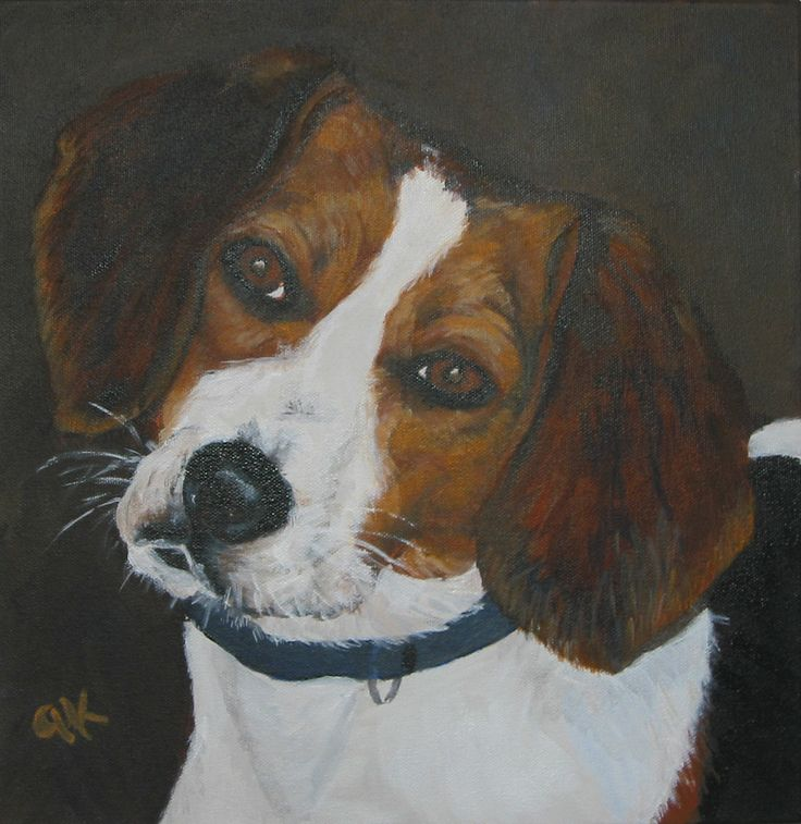 Portrait of the young Beagle Frankie we fostered for a couple of weeks.