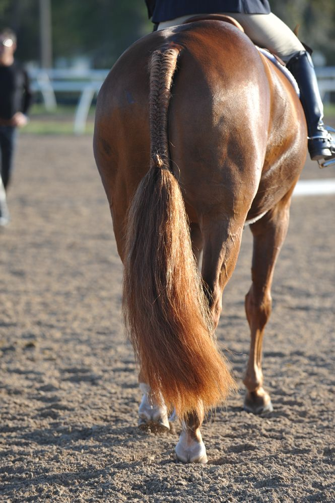 Top Tips For A Truly Beautiful Tail | The Chronicle of the Horse
