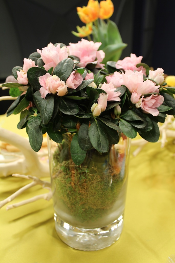 Moss Surrounds Delicate Pink Flowers In Pretty Gl Vases By Debi Lilly Design For Safeway