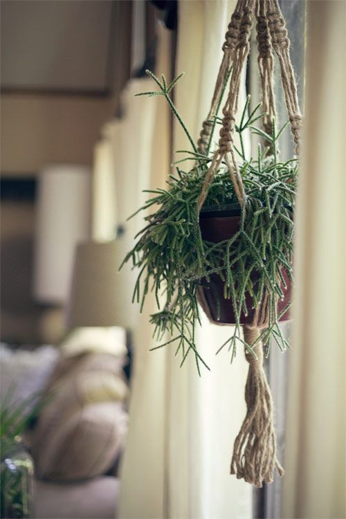 have one, macrame plant hanger my dad made in college - what if we gave it Kate's blue tie dye treatment to freshen it up?
