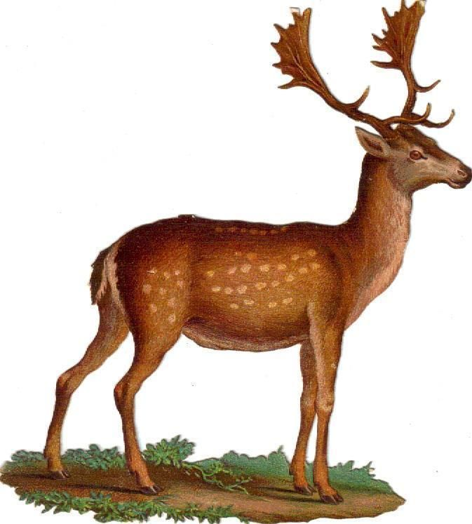 Victorian Die Cut Scrap Antlered Buck Deer c1880: