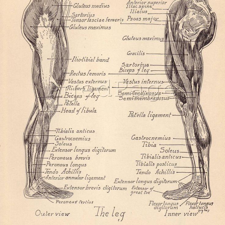 vintage anatomy | Massage | Pinterest | Anatomy, Vintage and Human ...