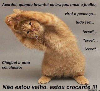 Frases - Frases de gatos engraçadas                              …
