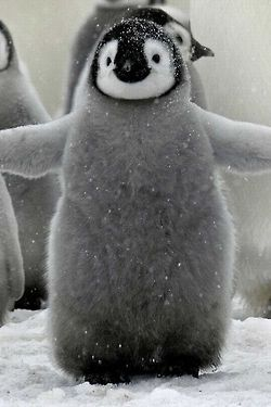 Adorable little penquin...couldn't you just hug it forever!!!