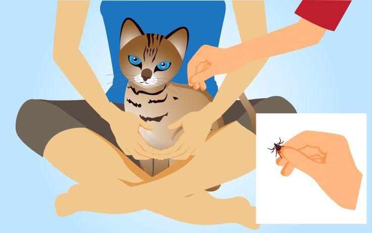 How to Kill Fleas and Ticks on Cats -- via wikiHow.com