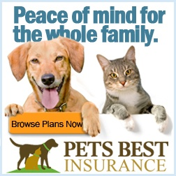 FREE Pet Insurance Reviews and Quotes! Pet insurance