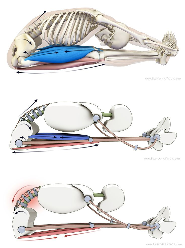 Preventative Strategies for Lower Back Strains in Yoga: Part One. Lumbar-pelvic rhythm refers to a type of joint coupling whereby tilting the pelvis in one direction produces a corresponding movement in the lumbar. Tilting the pelvis back (tucking the tailbone) produces flexion of the lumbar vertebrae. Tilting the pelvis forward produces extension.