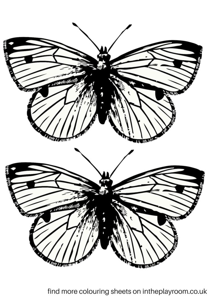 17 Best ideas about Printable Butterfly