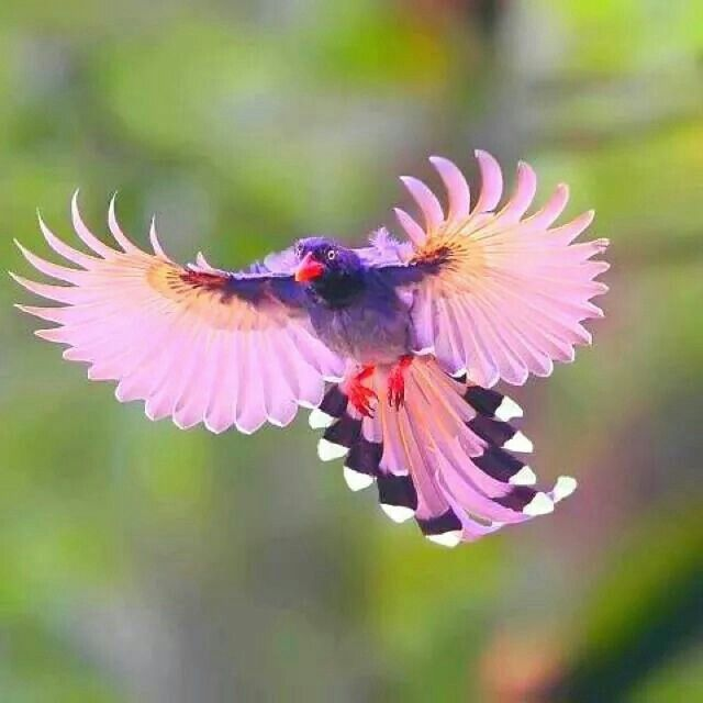 What type of bird is this? Beautiful.