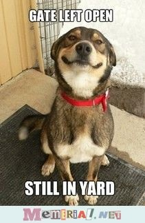 good dog.  This is THE BEST EVER.