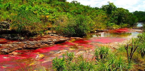"Caño Cristales River, Colombia Also referred to as ""the river of five colors,"" this biological wonder turns a striking red color every fall thanks to a rare plant species that flourishes on its sandy floor. View Panoramic."