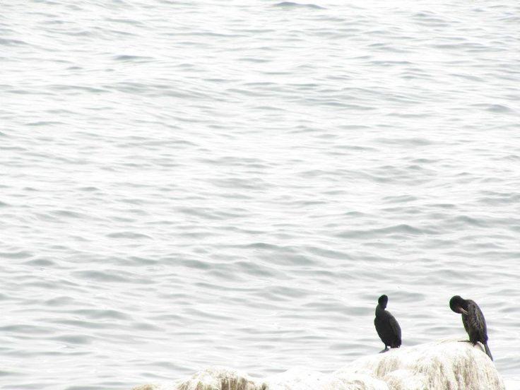 Playa Ancha, Region de Valparaiso, Chile.