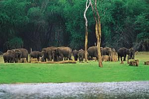Thekkady Travel Guide describes about the popular tourism attractions in Thekkady and around the nearby hill stations in Kerala, India. Boating on the Lake inside the deep forest by seeing wildlife in their natural habitat, Trekking, Spice tourism, Elephant ride, enjoying the natural greeneries of the hills etc. are the major attractions in a Thekkady trip.