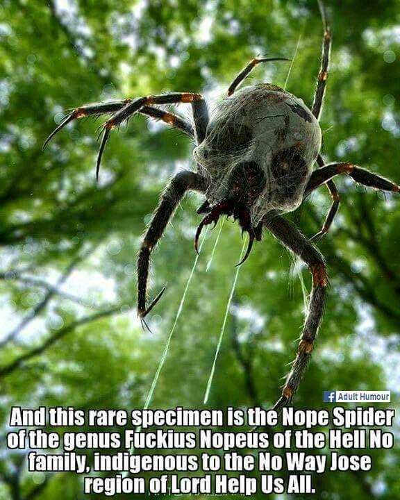 Pretty sure that's actually a skulltalla<--Haha