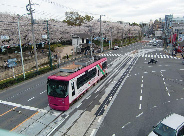 都電と桜  飛鳥山交差点 2014.4