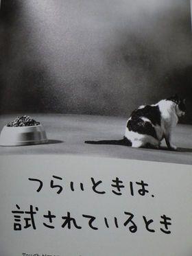 【話題】人生はニャンとかなる!明日に幸福をまねく68の方法【まとめ】 - NAVER まとめ