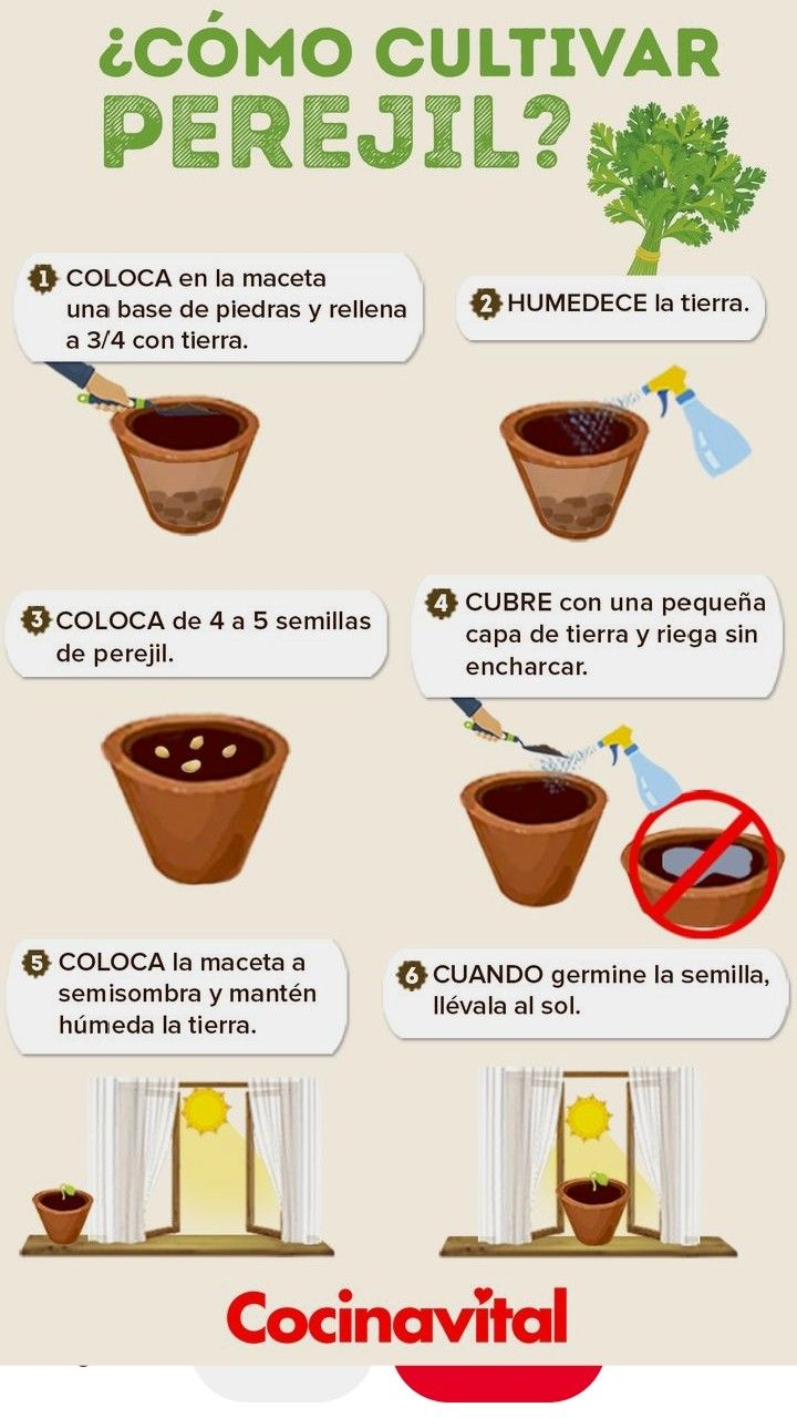 Pin De Valeria Del Castillo En Huerta Y Sus Cuidados Cultivo De Plantas Jardineria Y Plantas Jardinería De Invernadero
