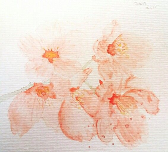 My #water colour #painting of #sakura