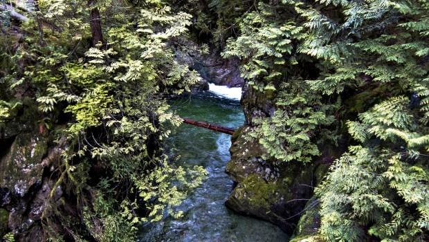 Lynn Canyon, Vancouver BC