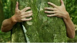 Деревья помогают снять стресс