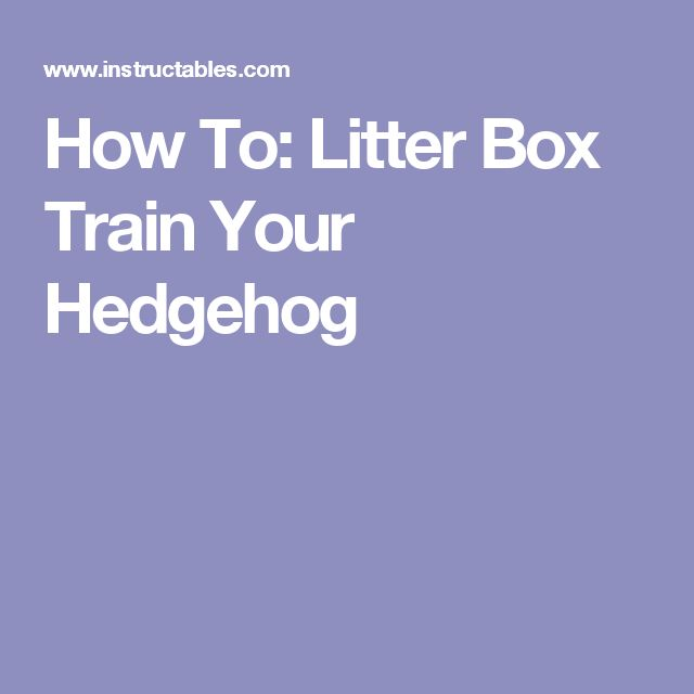 How To: Litter Box Train Your Hedgehog
