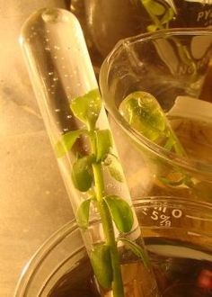 Biology Labs, Activities, Videos, and Study Guides About Cells (Photosynthesis, Mitosis, Cell Organelles, and More)