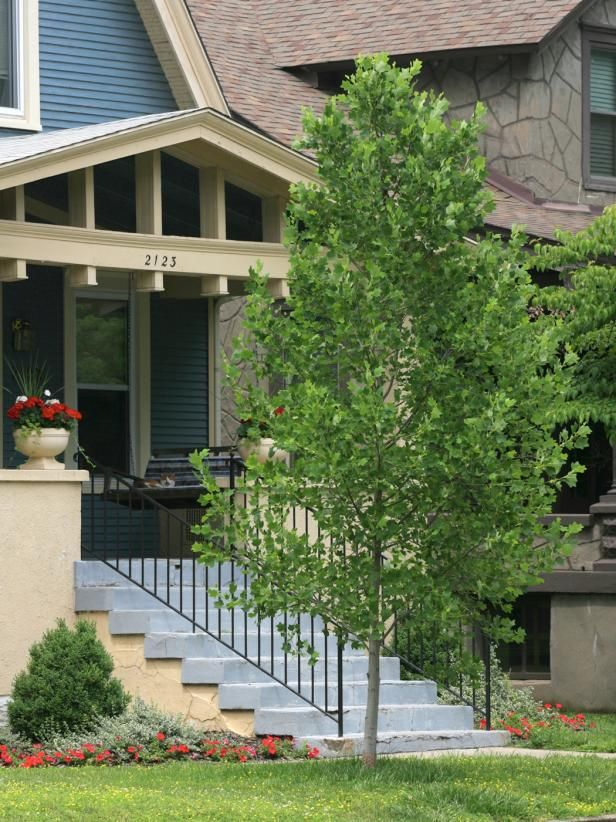 14 Favorite Front Yard Trees Trees For Front Yard Landscaping