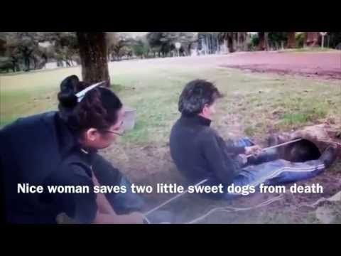 Amazing Woman saves Two Little Cute and Sweet Dogs from Death