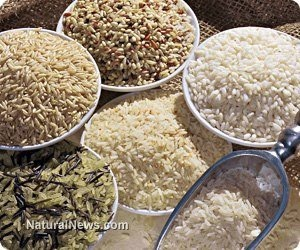 Organic rice farmer in India yields over 22 tons of crop on only two acres, proving the fraud of GMOs and Big Ag  Learn more: http://www.naturalnews.com/039766_rice_farming_organic_agriculture_yields.html#ixzz2PR2tjb6X  http://www.naturalnews.com/039766_rice_farming_organic_agriculture_yields.html