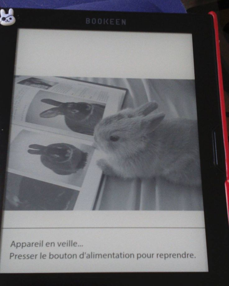 This book-reading bunneh screensaver on @lili_galipette's #Cybook is way too adorable!
