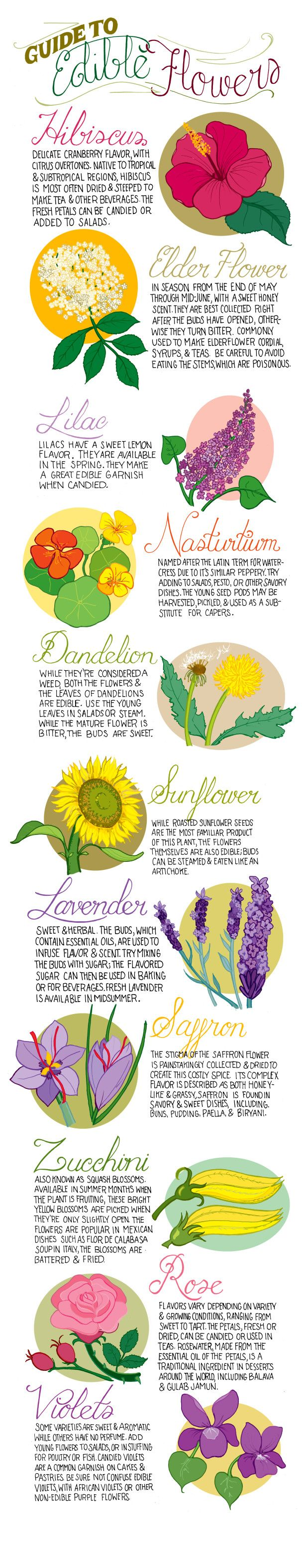 Edible Flowers Chart: Always use ORGANIC - ones that have zero chemicals sprayed on them.