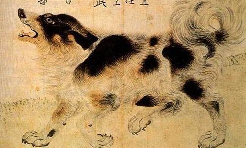 (1995년 발견된 조선시대 남리 김두령의 삽살개)