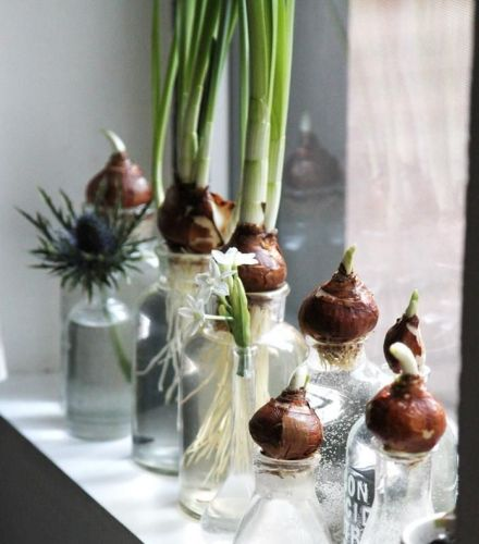 Best 20+ Mini serre intérieur ideas on Pinterest | Simple serre ...