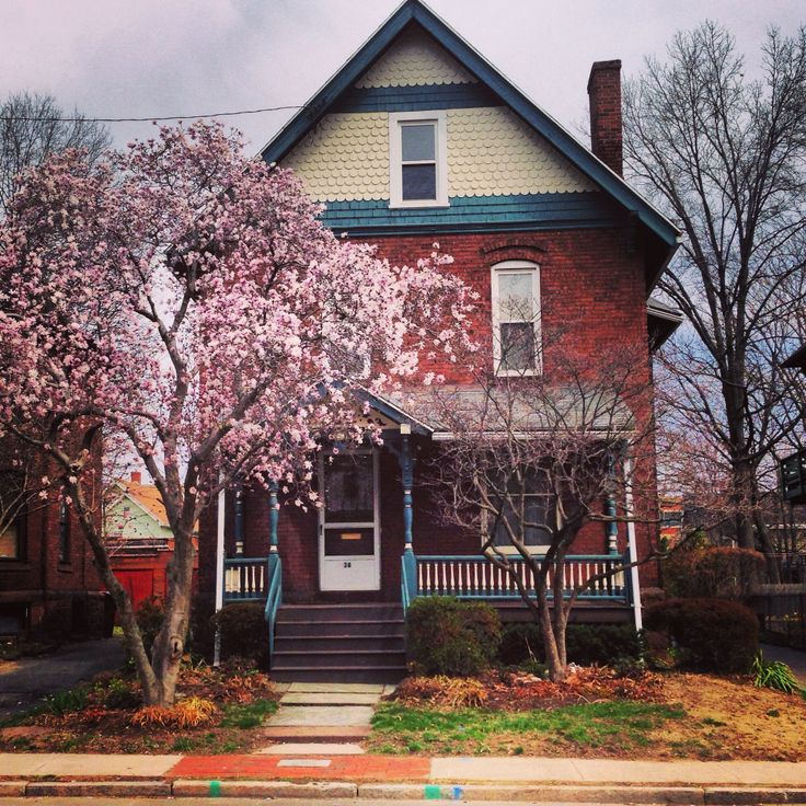Beautiful cherry blossom tree in the front yard for Small pretty trees for front yard