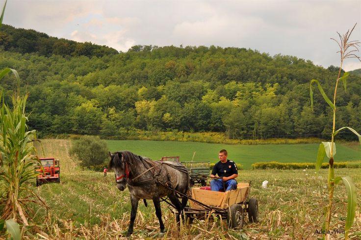 Biertan Village in Transylvania, Romania - man at work