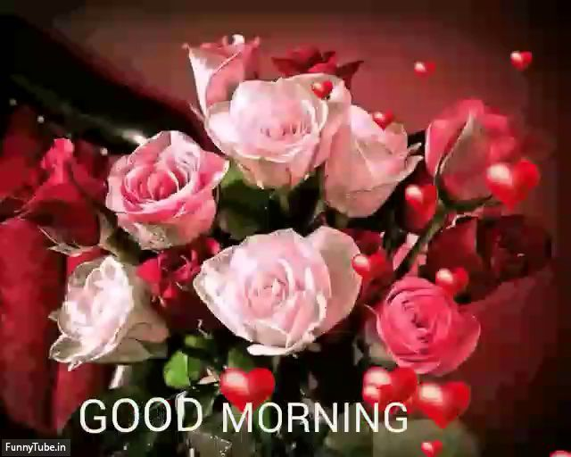 Free Whatsapp Status Video Download Funny Videos Funnytube In Good Morning Roses Good Morning Gif Good Morning Flowers