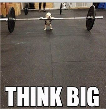 Fitness |This is how I feel when I workout with the big boys :)