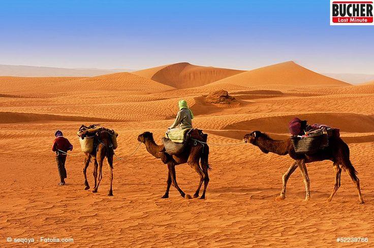 Schnapp dir dein Kamel und ab geht die Reise! Hier gibt es so einiges zu entdecken! #marokko #wüstentour #kamele #lastminute #bucherreisen