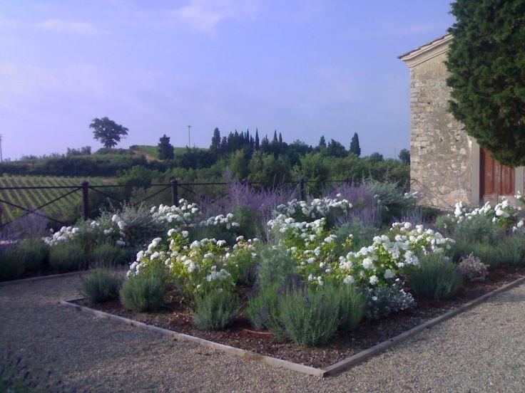 Lavender iceberg roses perovskia garden ideas for Garden design ideas lavender
