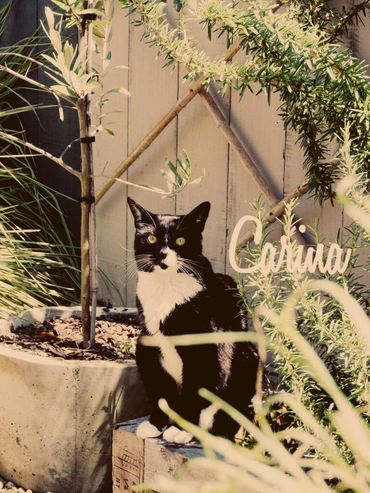 Carina the cat