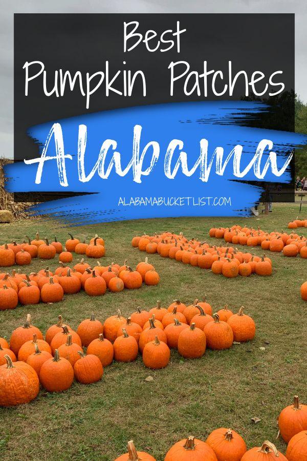 Best Pumpkin Patches In Alabama Alabama Bucket List In 2020 Best Pumpkin Patches Travel Bucket List Usa Pumpkin Patch