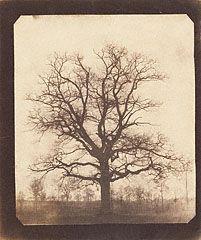 An Oak Tree in Winter, William Henry Fox Talbot, probably 1842-3: Trees In Winter, Art, Talbots, Tattoo, Foxes, William Henry, Oak Tree