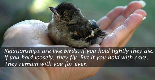 relationships are like birds, long friendship quotes, ending friendship quotes, girl friendship quotes