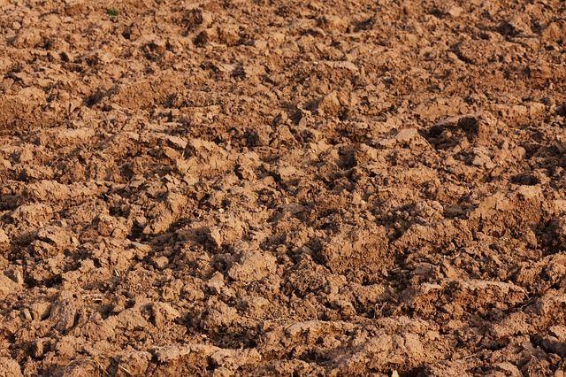 Vom Samen bis zur Ernte: Die richtige Erde hält eure Pflanzen fit: Eure Erde ist ein Gemisch aus folgenden Materialien: Sand, Ton, Lehm und Humus. Je...