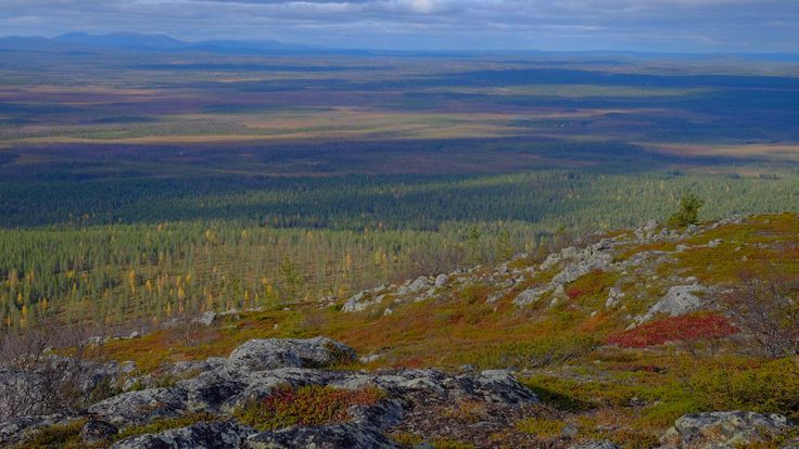 Photo by Tim Bird Photo @BirdTimothy Kittilä, Finnish Lapland Endless views and fabulous  'ruska' autumn colours @visitlapland #ruska #Finland #filmlapland #wilderness #arcticshooting